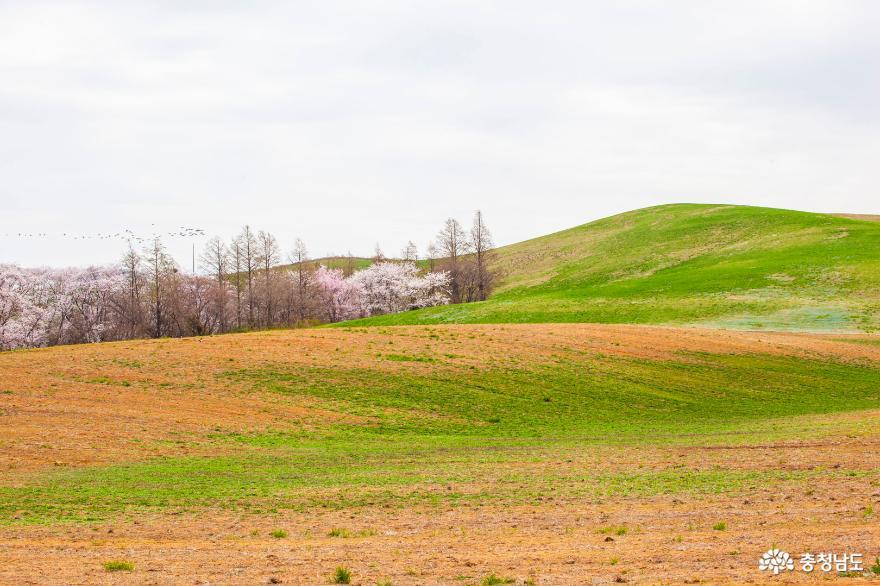 봄이 만든 초록의 향연, 서산목장 풍경