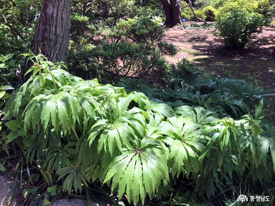 자연의 보고, 식물의 보고인 천리포수목원