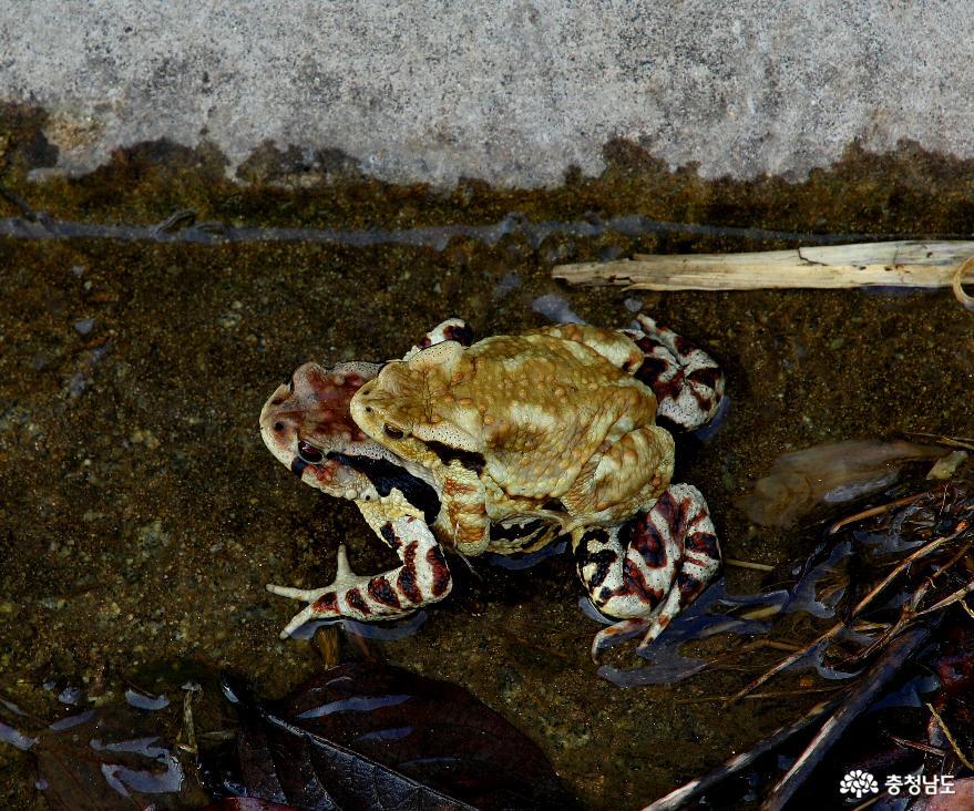 두꺼비이야기