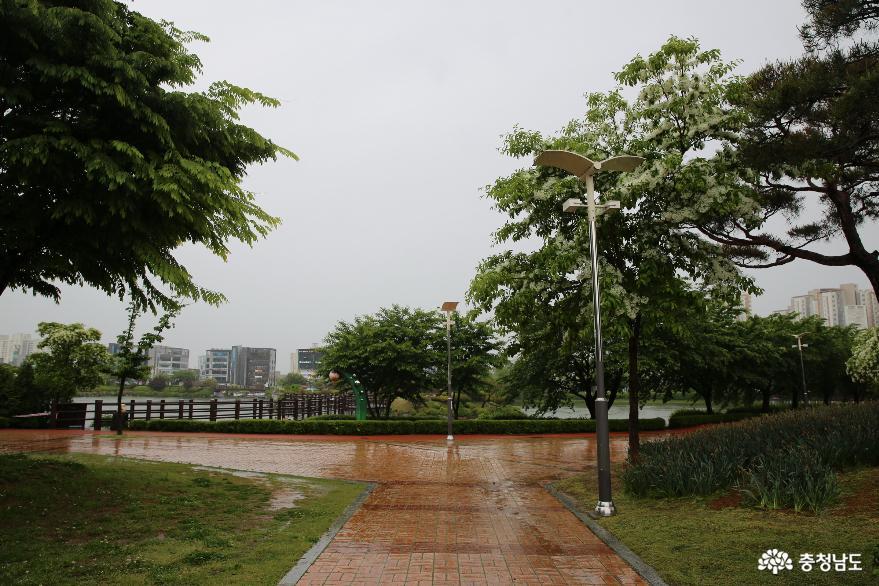 비가 오는 날에 운치있게 돌아본 서산의 중앙공원