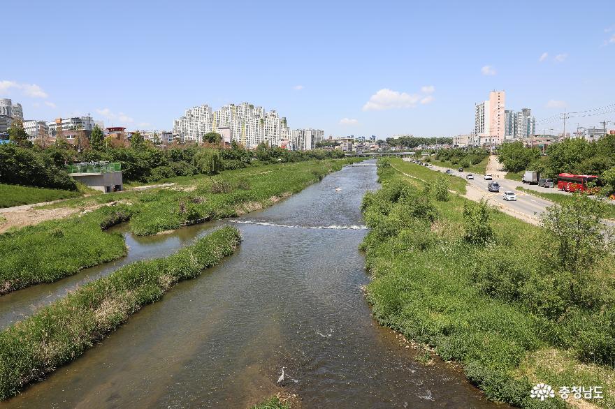 청주의 젖줄 무심천, 사람과 자연공존의 친환경하천