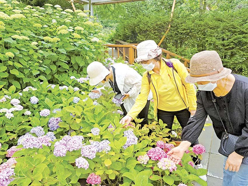사랑과 꽃 피우는 고운식물원