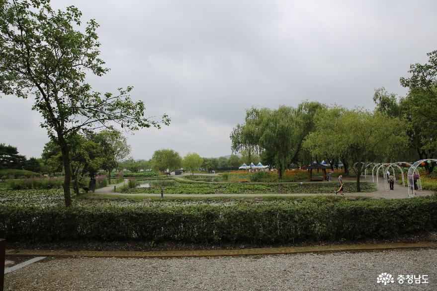 올해 취소된 부여 궁남지의 서동연꽃은 여름동안 길게 만나요.
