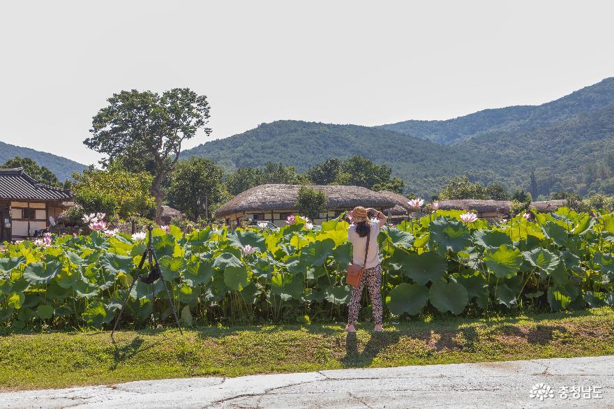 아산 외암 민속마을의 여름 풍경