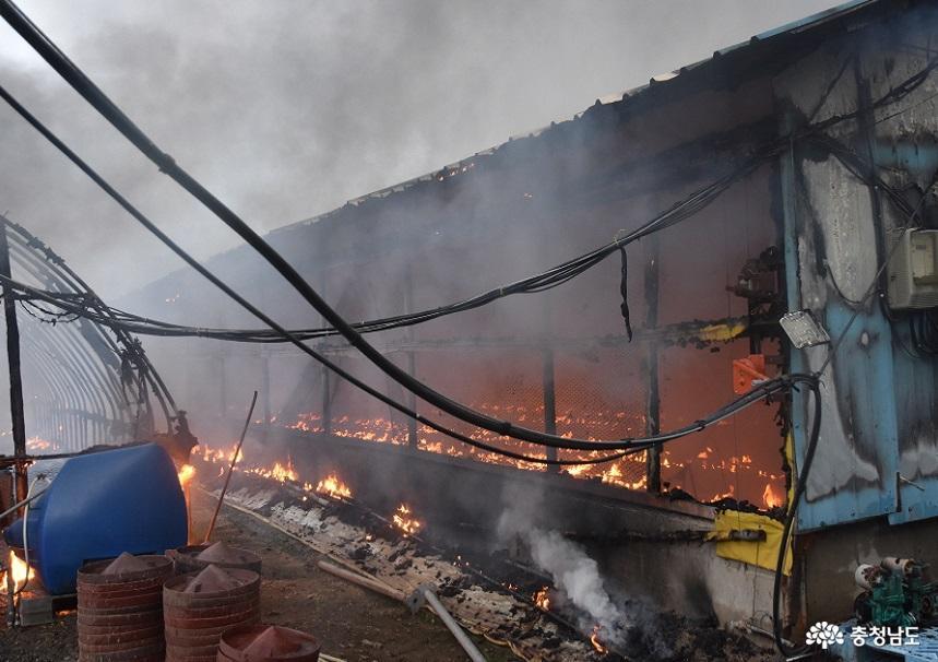 충남소방, 폭염 속 전기 과부하 축사 화재 주의보