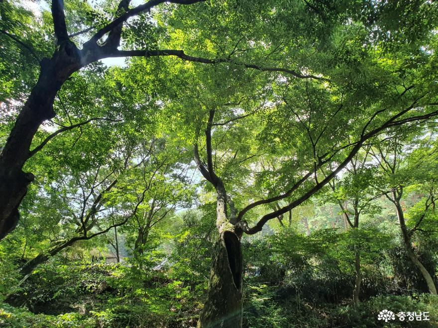 폭염 속 시원한 휴식처 아산 강당골 계곡