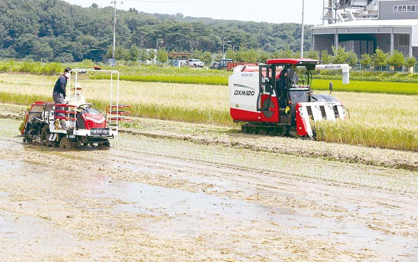 대한민국 초고속 쌀 `빠르미' 햅쌀시장 선점 시동