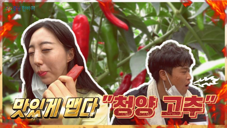 """[충남한바퀴] 방송 """"NG"""" 나게 맛있게 매운 맛 """"청양고추"""""""
