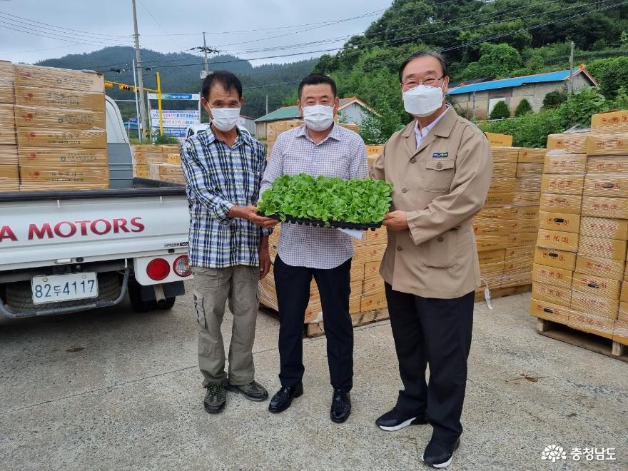 원북농협, 전 조합원에 '배추육묘' 지원