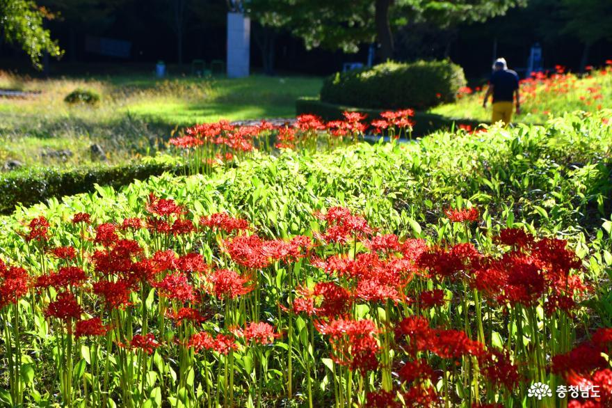 가을 햇살 따뜻한 아산 신정호조각공원