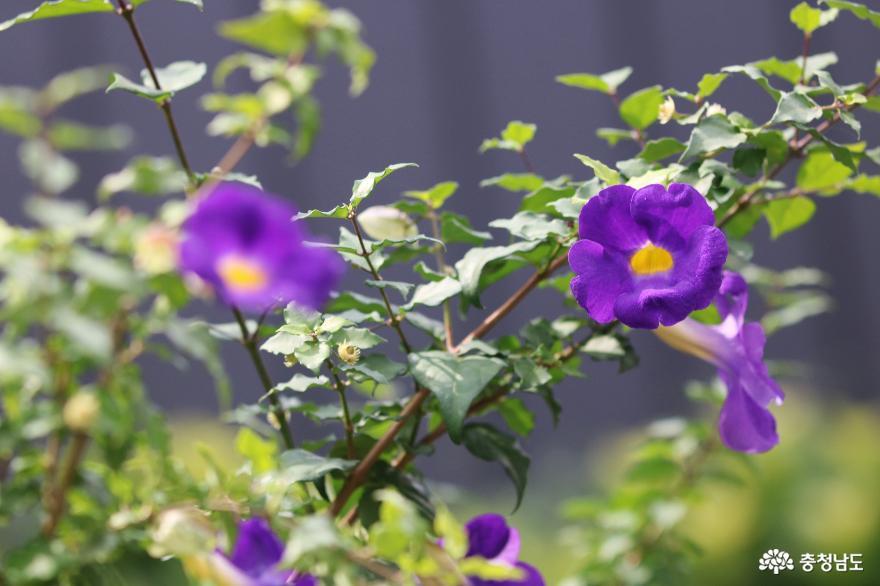 힐링 명소, 꽃향기 그윽한 아름다운정원 화수목
