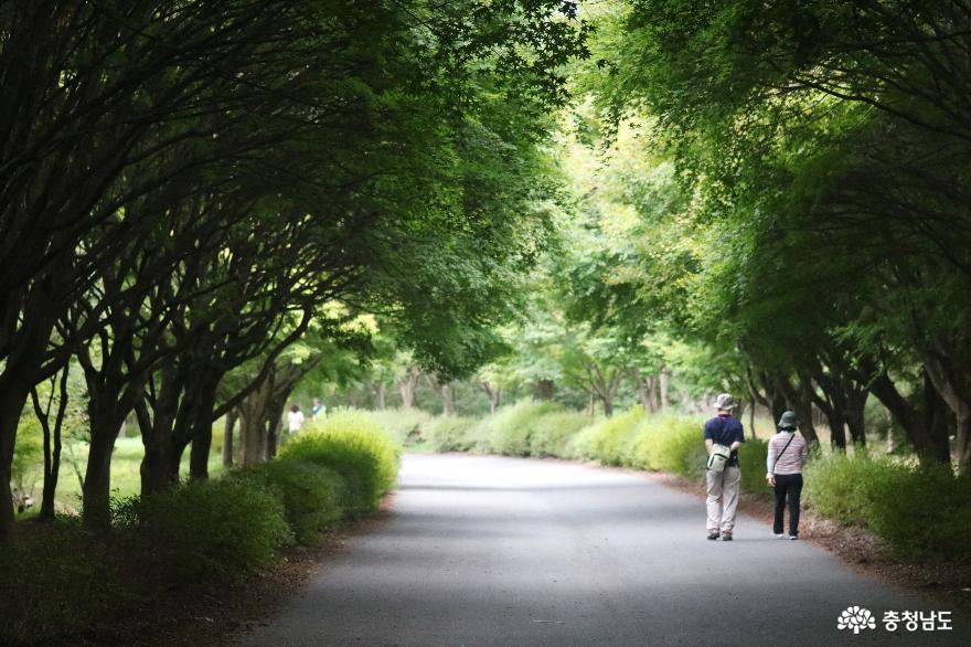 누구나 걷기 좋은 힐링 명소, 독립기념관