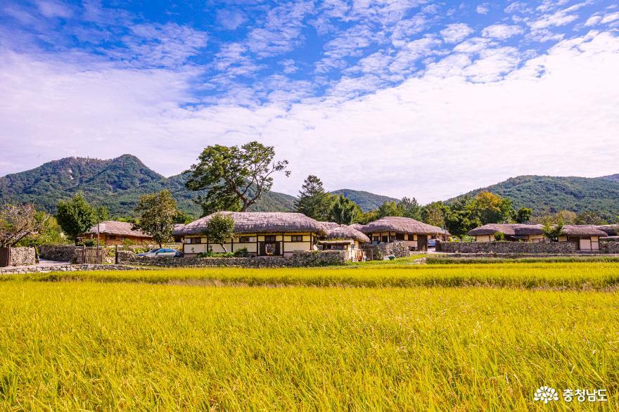 황금들판 손짓하는 외암민속마을의 목가적 풍경