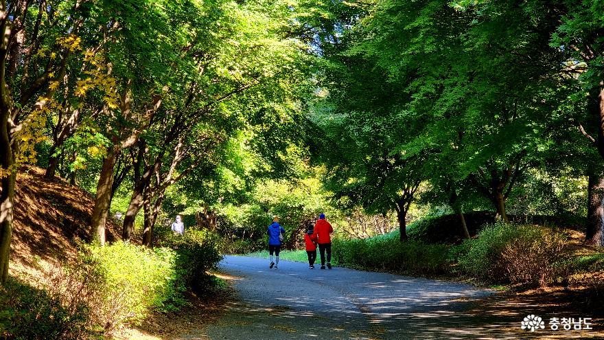 [통통충남]단풍나무숲길에서 천안 흑성산까지 가을 산행