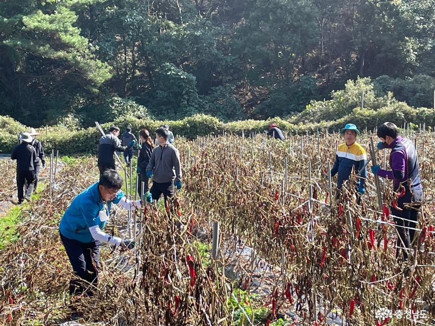 가을철 수확기 농촌일손돕기 시동