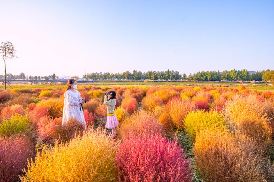 아산 곡교천, 가을의 색(色)으로 물들다.