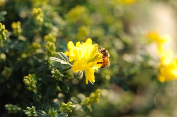 봄마중 나온 꽃들의 미소