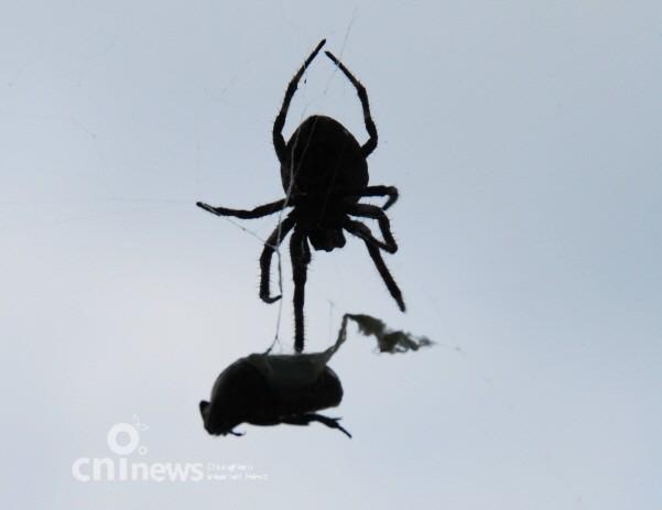 거미 순간포착, 숨막히는 생태계의 현장