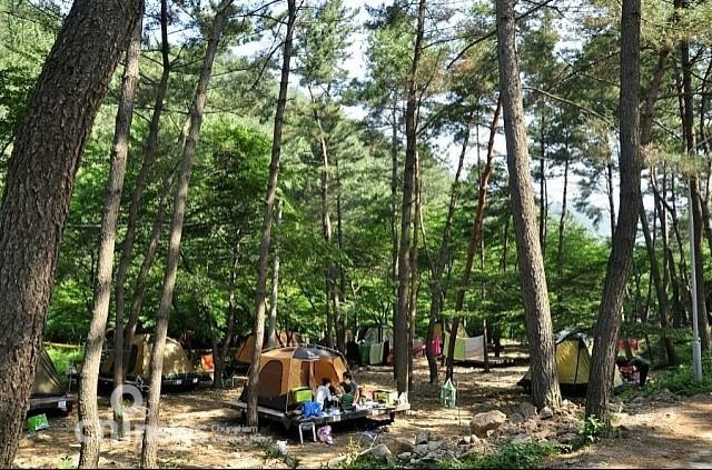 국내 유일 천연해송림 희리산휴양림